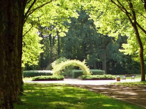 Rosarium Albertpark Wild (Groß)